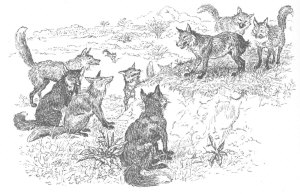 Fox without Tail (from Caldecott's Aesop)
